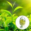 Polvere organica del tè verde di usda Matcha