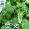 Extrato natural dos bróculos do pó dos bróculos de 100%