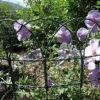 Frontière de sécurité de cadre de frontière de sécurité de jardin de PVC (HP-BF05)