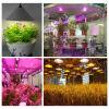 Заводов спектра дневных СИД света рождества освещение полных крытых профессиональное растущий и напольная электрическая лампочка светов 100W сада