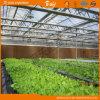 寿命のVenloの長いタイプマルチスパンのガラス壁の温室