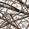 Tsau Top 0.5m Width Tree PVA Water Transfer Printing Film