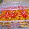 O mandarino fresco do bebê de Nanfeng da colheita nova