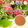 Rhodiola naturale Rosea Extract con Salidrosides