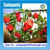 China-bestes verkaufenpc Gewächshaus für Blume
