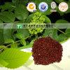 Fruta cruda orgánica de Medcinal Evodia de la medicina de la fuente del fabricante