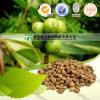 100%の純粋で自然なハーブの薬のSharpleaf Galangalのフルーツ