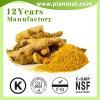 Curcumina de Gingerol del extracto de la planta del extracto de la hierba del extracto del jengibre