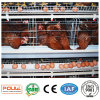 Automatic To bush-hammer Chicken Cage Poultry Farm Equipment System