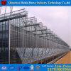 Chambre verte hydroponique en verre d'usine de la Chine pour la tomate