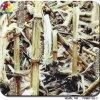 Tsautop 1m camufla largamente e película da impressão PVA de transferência da água da impressão da árvore 3D