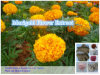 Zéaxanthine normale de la lutéine 5% de poudre d'extrait de fleur de souci de 100%