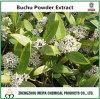 Extracto natural Flavoniods del polvo de la hoja del 100% Buchu con el mejor precio