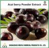 Extrait antioxydant superbe normal d'usine de baie d'Acai avec l'analyse d'anthocyanidine