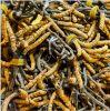 GMPの工場Cordyceps Sinensisは10%~40%の多糖類を得る
