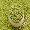 Зеленые фасоли Mung начала Китая