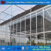Estufa de vidro dos sistemas hidropónicos comerciais da Multi-Extensão para o cogumelo