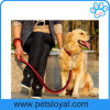مصنع حارّ عمليّة بيع نيلون محبوب رصاص كلب رباط ([هب-100])