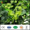 中国の製造者の友好的なプラスチック緑の庭の壁のプラント
