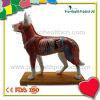 Medizinisches Akupunktur-Hundebaumuster für das Unterrichten