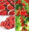 Natürlicher Mispel-Bienen-Blütenstaub, Biokost