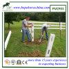 Загородка PVC лошади
