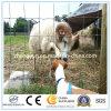 Rete fissa del giacimento della rete fissa del bestiame della rete fissa dei cervi del campo dell'azienda agricola del rifornimento della Cina