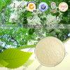 Quercétine naturelle d'extrait de bourgeon floral de 100% Pagodatree