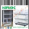Maille mobile de zinc empilant le panier d'étalage (HBE-MC-5)
