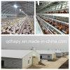 Het geprefabriceerde die Landbouwbedrijf van de Kip met de Apparatuur van het Fokken wordt afgeworpen
