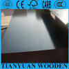 1220*2440mm WBP Glue Shuttering Plywood