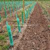 Dispositif protecteur de vigne de Corflute