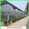 Type arqueado Agricultural Seeds Vegetable Greenhouses para Tomatoes para Sale