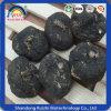 Schwarze Maca Wurzel für Biokost