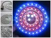 Nuova luce della rottura dell'automobile, 1157 tipo, luce rossa/blu, d'avvertimento dell'occhio di angelo,