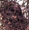 Fougère sèche (YS001, YS002)