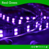 SMD5050 220V Double Row LED Strip Light