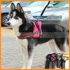 Insieme della maglia del cablaggio del cane di sport di formazione professionale del cane di animale domestico