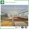 Plastikfilm-Landwirtschafts-Gewächshaus für Tomaten/Blumen
