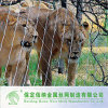 適用範囲が広いトラの動物園機構の網