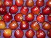 2017 estrella roja fresca Apple con la alta calidad para exportar