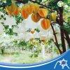 Bolso protegido Jc-011 de la fruta