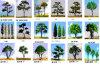شجرة نموذجيّة
