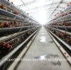 Chicken automático Cage Farm para Layers com GV Cetification