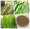 Weiße Weide-Barke-Auszug 10%-98% Salicin