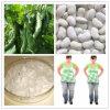 自然で白い腎臓豆のエキスPhaseolamin