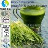Poudre organique cachère de jus d'herbe d'orge de l'USDA Nop Jas/poudre de jus herbe de blé