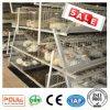 Equipo automático de la avicultura de la jaula del pollo de la parrilla
