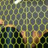 Rede de fio sextavada revestida do PVC