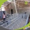 Großhandelsschwein-landwirtschaftliche Maschine-Sau-Schwangerschaft-Rahmen-einzelne Sau-Feder-Fabrik für Verkauf